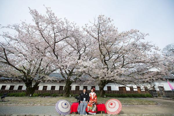 ファシーノ 和装前撮り 桜ロケ 舞鶴公園 スーパーカメラマン大川さん