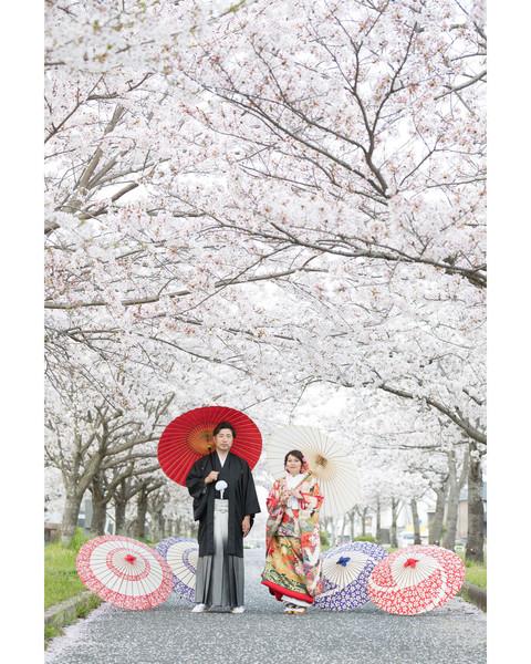 スーパーカメラマン大川さん ファシーノ 和装前撮り 桜 ファシーノ